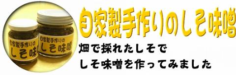 home_shiso.jpg