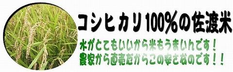 home_sadomai.jpg