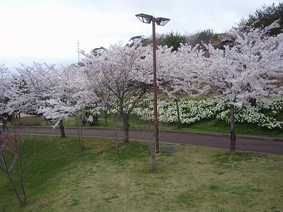 manosakura2.jpg