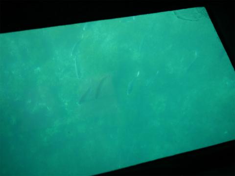 shark4.jpg